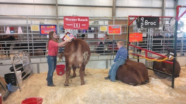 2013 county fair